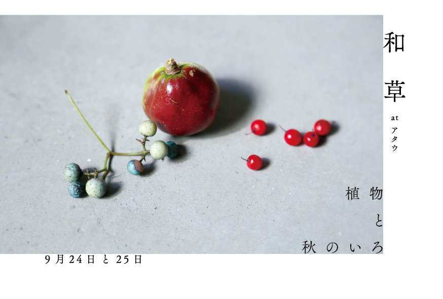 nikogusa_dm_03_ol-01